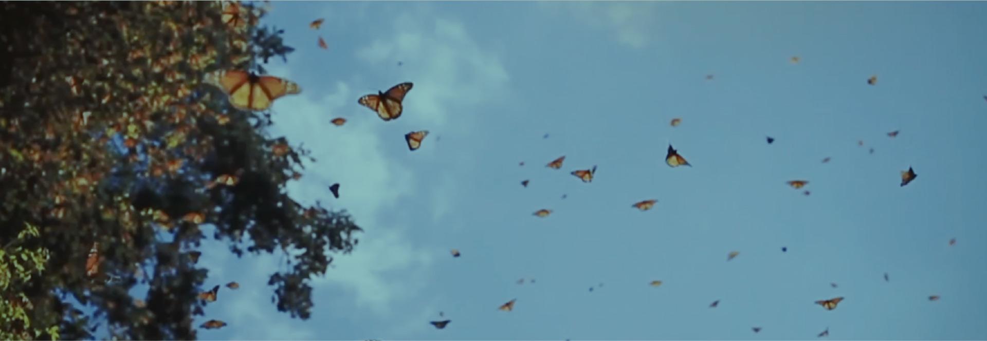 La Mariposa Monarca, una especie que merece un santuario