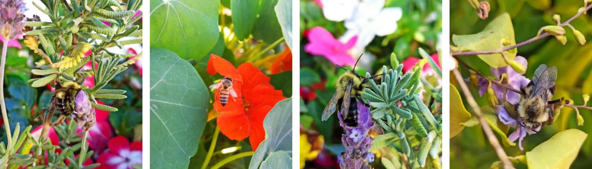 Alas para el Campo, cuidando a la mariposa monarca y a los polinizadores